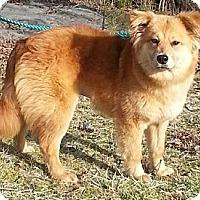 Adopt A Pet :: Vega - Brattleboro, VT