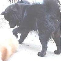 Adopt A Pet :: Huggie Bear - Columbus, OH