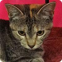 Adopt A Pet :: Twilight - Escondido, CA