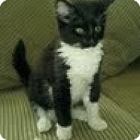 Adopt A Pet :: Big B - Modesto, CA