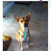 Adopt A Pet :: Ben - Fort Lauderdale, FL
