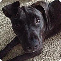 Adopt A Pet :: Maddie - La Habra, CA