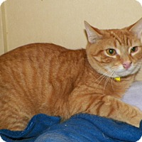 Adopt A Pet :: Lovey - Dover, OH