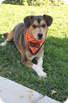 Beagle/Shepherd (Unknown Type) Mix Dog for adoption in Manhattan, Kansas - Aggie