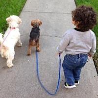 Adopt A Pet :: Chewy - Vista, CA