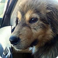 Adopt A Pet :: Hank - New Canaan, CT