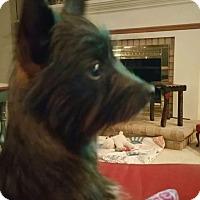 Adopt A Pet :: Mazzie - Hamburg, PA