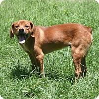 Adopt A Pet :: Jack - Lufkin, TX