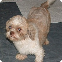 Adopt A Pet :: Sawyer - Fairview Heights, IL