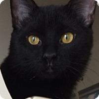 Adopt A Pet :: Dino - Fort Wayne, IN