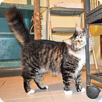 Adopt A Pet :: Lily - Venice, FL