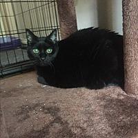 Adopt A Pet :: Hemingway - Fox River Grove, IL