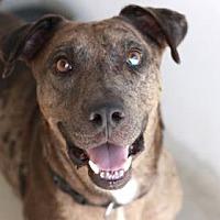 Adopt A Pet :: OTIS - Kyle, TX