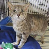 Adopt A Pet :: Thomas - Westville, IN