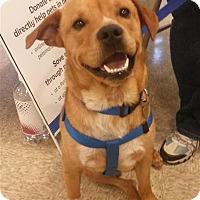 Adopt A Pet :: Majestic - Fairfax Station, VA