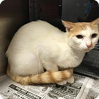 Adopt A Pet :: Dixie - Henderson, NC
