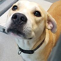 Adopt A Pet :: Grayson - Baytown, TX
