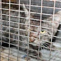Adopt A Pet :: A1721898 - Los Angeles, CA
