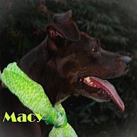 Adopt A Pet :: Macy - Gibbstown, NJ