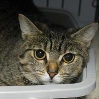 Adopt A Pet :: Emma - Lafayette, IN