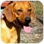 Photo 3 - Dachshund Mix Dog for adoption in Washington, North Carolina - Bucky