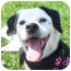 Photo 1 - Pug/Beagle Mix Dog for adoption in Barron, Wisconsin - Julia