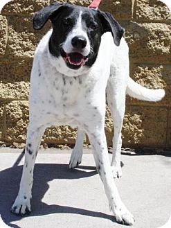 Border Collie Mix Dog for adoption in Gilbert, Arizona - Duke