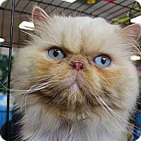 Adopt A Pet :: Leo - Beverly Hills, CA