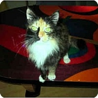 Adopt A Pet :: Loretta (Lovely and Sweet!) - Portland, OR