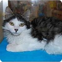 Adopt A Pet :: Karlsson - Modesto, CA