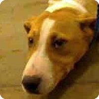 Adopt A Pet :: Charm - PUPPY! - Antioch, IL