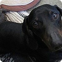 Adopt A Pet :: Pepito - San Ysidro, CA