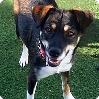 Adopt A Pet :: Sani: Enthusiastic Forever Friend - Newport Beach, CA