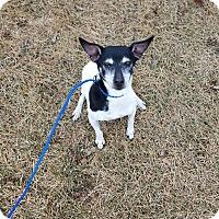 Adopt A Pet :: Fred - Indianola, IA
