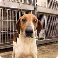 Adopt A Pet :: Jim - Upper Sandusky, OH