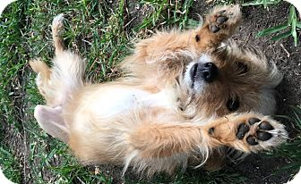 Terrier (Unknown Type, Small) Mix Dog for adoption in Pittsburgh, Pennsylvania - Barley