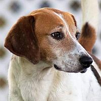Adopt A Pet :: Jake N - Fairfax Station, VA