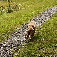 Adopt A Pet :: Lucky - Special Needs - Kannapolis, NC