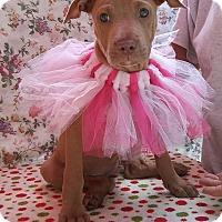 Adopt A Pet :: Maria - Toms River, NJ