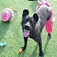 Adopt A Pet :: MARGO - Atlanta, GA