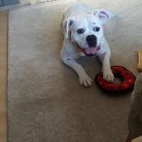 Adopt A Pet :: Tessa - Round Lake Beach, IL