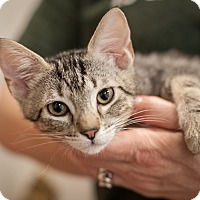 Adopt A Pet :: Croissant - Dallas, TX