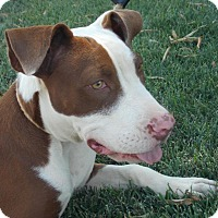 Adopt A Pet :: Molly - Bakersfield, CA