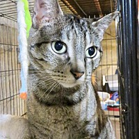 Adopt A Pet :: Buster - Colville, WA