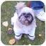 Photo 2 - Shih Tzu/Pekingese Mix Dog for adoption in Calgary, Alberta - Olie
