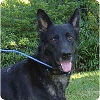 Adopt A Pet :: Sable - Pike Road, AL