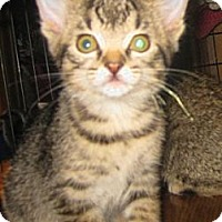 Adopt A Pet :: Champaign - Dallas, TX