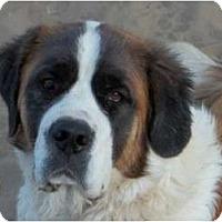 Adopt A Pet :: Lacie - Sparks, NV