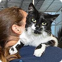 Adopt A Pet :: Sophia - New York, NY