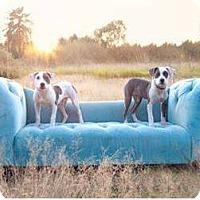 Adopt A Pet :: ROMEO - Kingston, WA